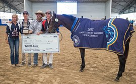 Huge increase in trainers applying to enter retired horses for Thoroughbred Makeover