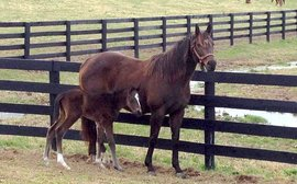 The Kentucky Derby colt who came into being thanks to a lucky throw of a dart