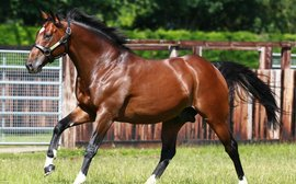Frankel as a first-season sire: how's he doing so far?