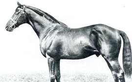 A stallion unrivalled in history as a dependable transmitter of stamina