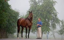 Elusive Quality, sire of Smarty Jones, pensioned from stud duties