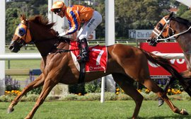 Caulfield Cup-bound Gingernuts still looks to be improving