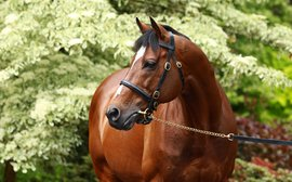 How important is Galileo to Coolmore's success on the racetrack?
