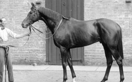 Unfashionable, unsound and lacking virility, yet this young stallion became a sensation at stud