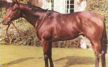 Habitat: can any European broodmare sire be called his superior?