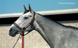 Children of Secretariat: the tiny filly who became one of the greatest ever