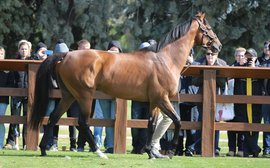 Stallions on parade: when do you ever get to see such an impressive array as this?