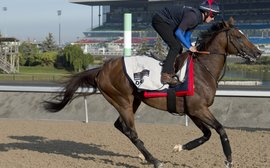 O'Meara hopes Mondialiste will show 'his true self' at Woodbine