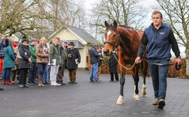 25 top farms taking part in next Irish Stallion Trail