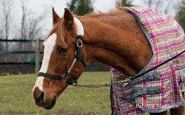 Children of Secretariat: wonderful memories of an equine ambassador