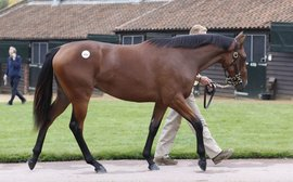 Expect fireworks when these yearlings come under the hammer next week