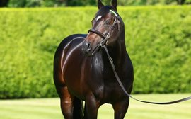 Kingman fee doubles as Juddmonte announce stallion fees for 2020