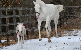 Getting it just white: this gorgeous foal continues a delightful legacy