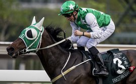 Cruz hoping Buick can work his magic with Pakistan Star in the big one