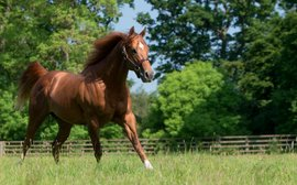 Four surprise packages among Britain's first-season sires