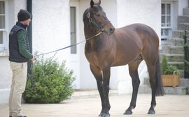 Irish Stallion Trail: a backstage pass to see some of the world's finest horses