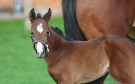 She'll always be his #1: meet the first foal of a Breeders' Cup hero