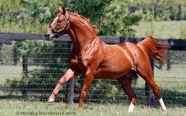 How's life for the horse who has become America's most reliable sire of Classic performers?