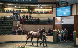 Yearling sales season highlights the continuing appeal of top Irish bloodstock
