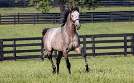 Taking care of small breeders: it's the inspiration behind Spendthrift's new Safe Bet program