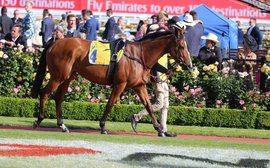 The 'spine-tingling' experience of having a runner on Melbourne Cup Day