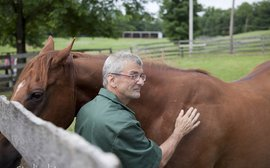 How ex-racehorses are playing a major role in the rehabilitation of offenders