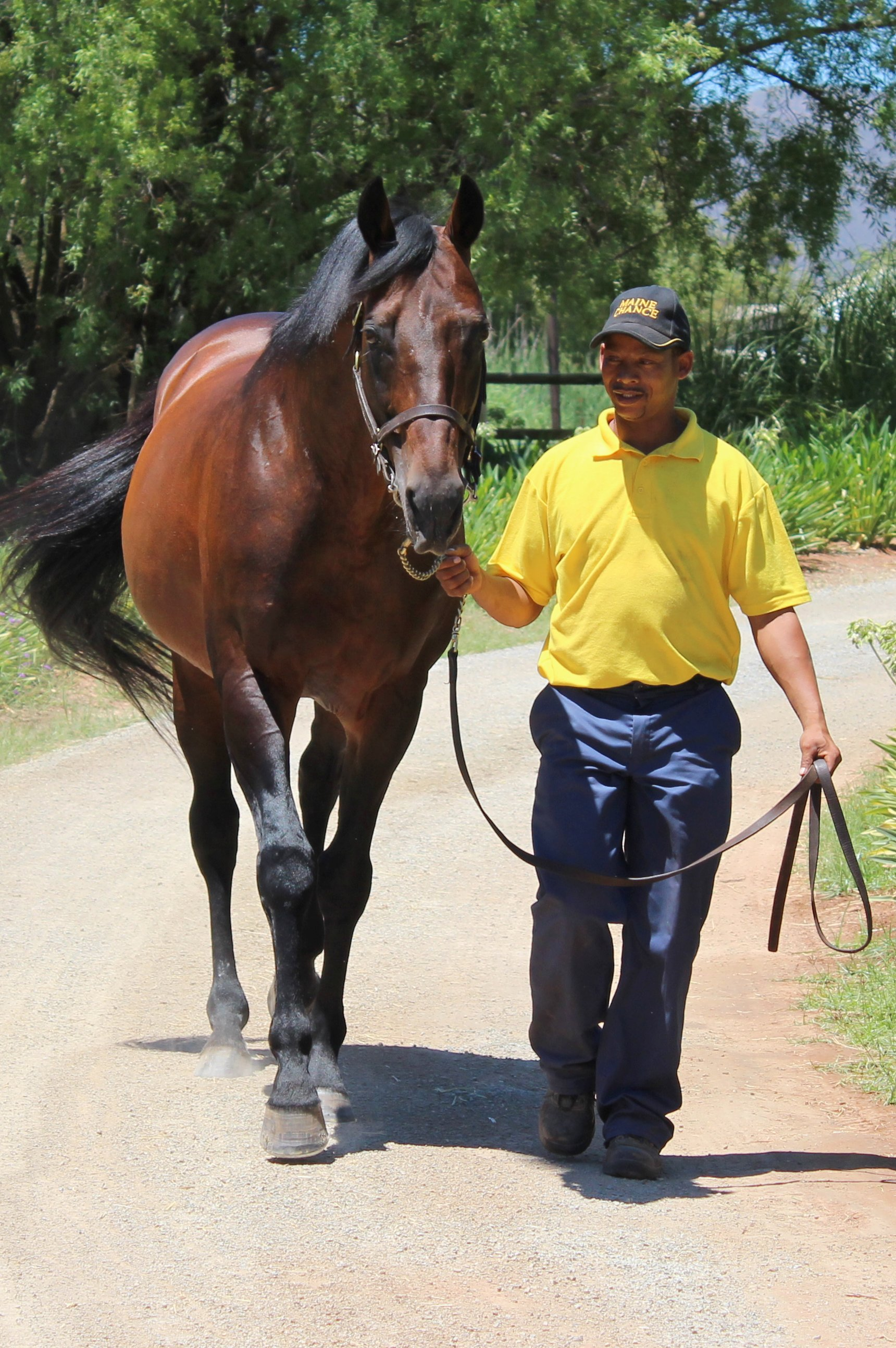Leading sire Silvano, who stands at Andreas Jacobs' Maine Chance Farms in the Western Cape. Photo: Isabel Mathew