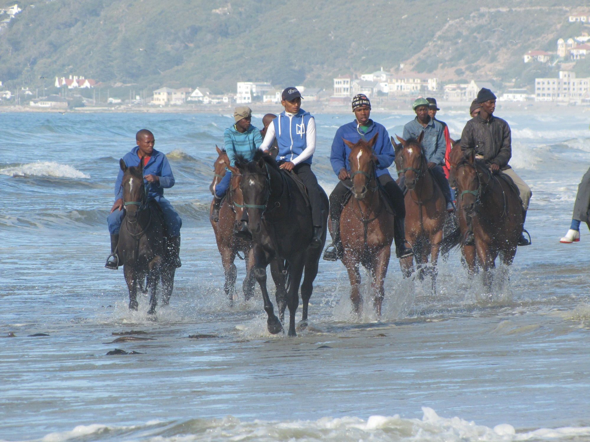 Sea the stars: trainer Brett Crawford's string keeping cool on Strandfontein beach near Muizenberg, near Cape Town. Photo: Isabel Mathew