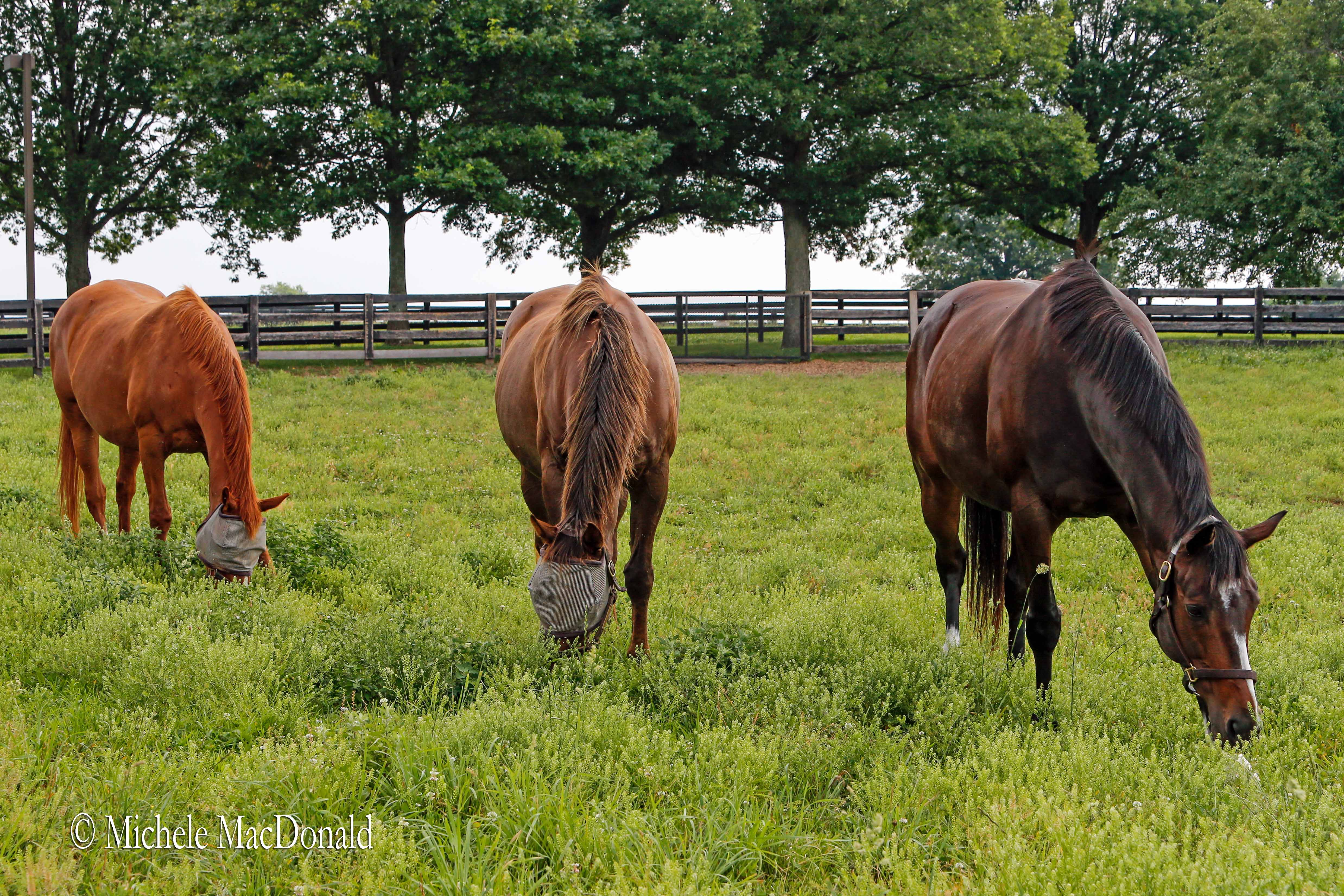 Leisure companions: 'Rachel loves her friends in the paddock, so I think she's enjoying life,' says Barbara Banke. Photo: Michele MaDonald