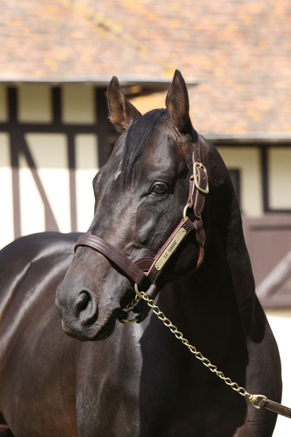 Leading the way: Le Havre looks set to take his first French sires' title this season. Photo: Isabel Mathew