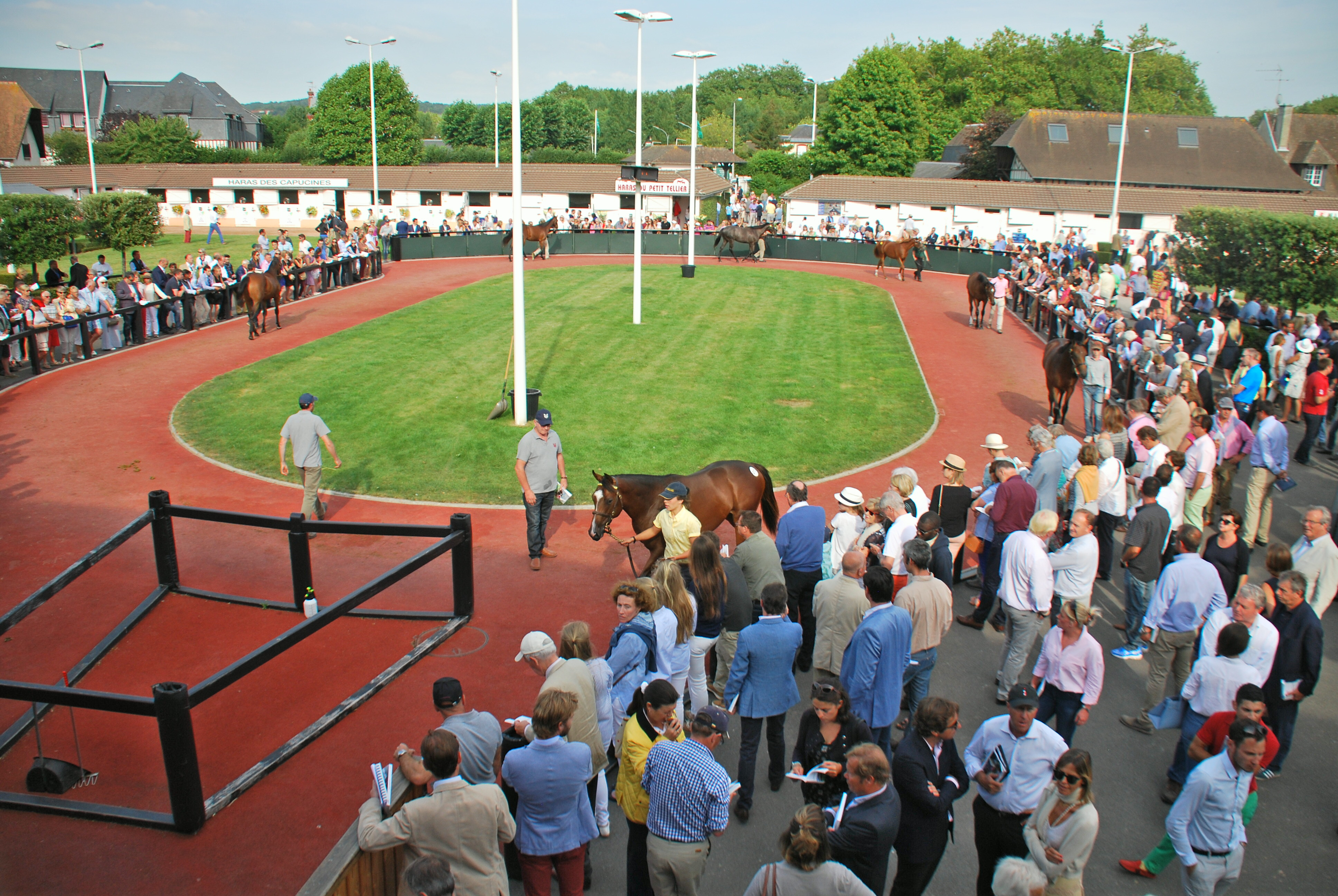 Yearlings are walked around the pre-parade ring at Deauville before going up for sale. Photo: John Gilmore