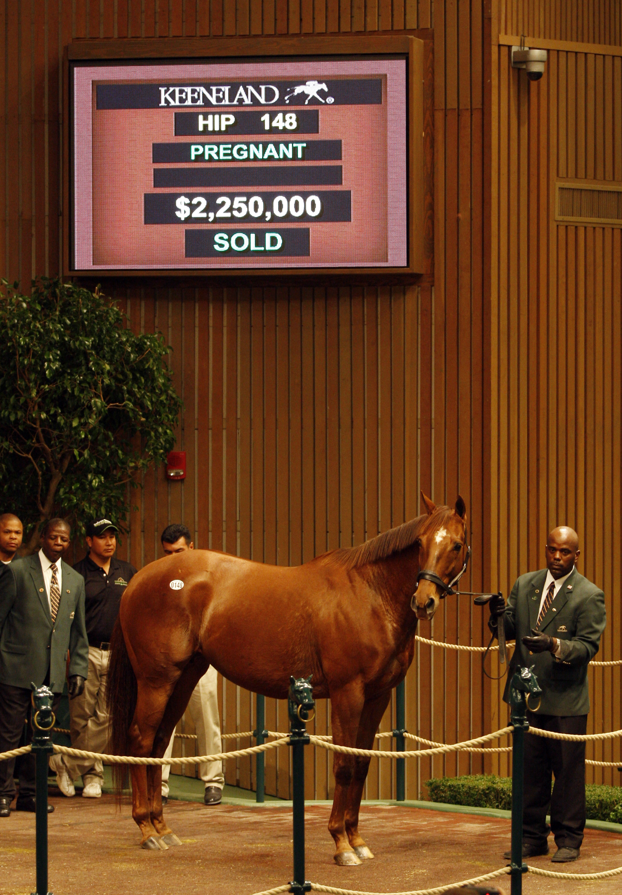 Drama in the sale ring: the moment Azeri was knocked down to the Yoshidas at Keeneland in 2009. Photo: Michele MacDonald