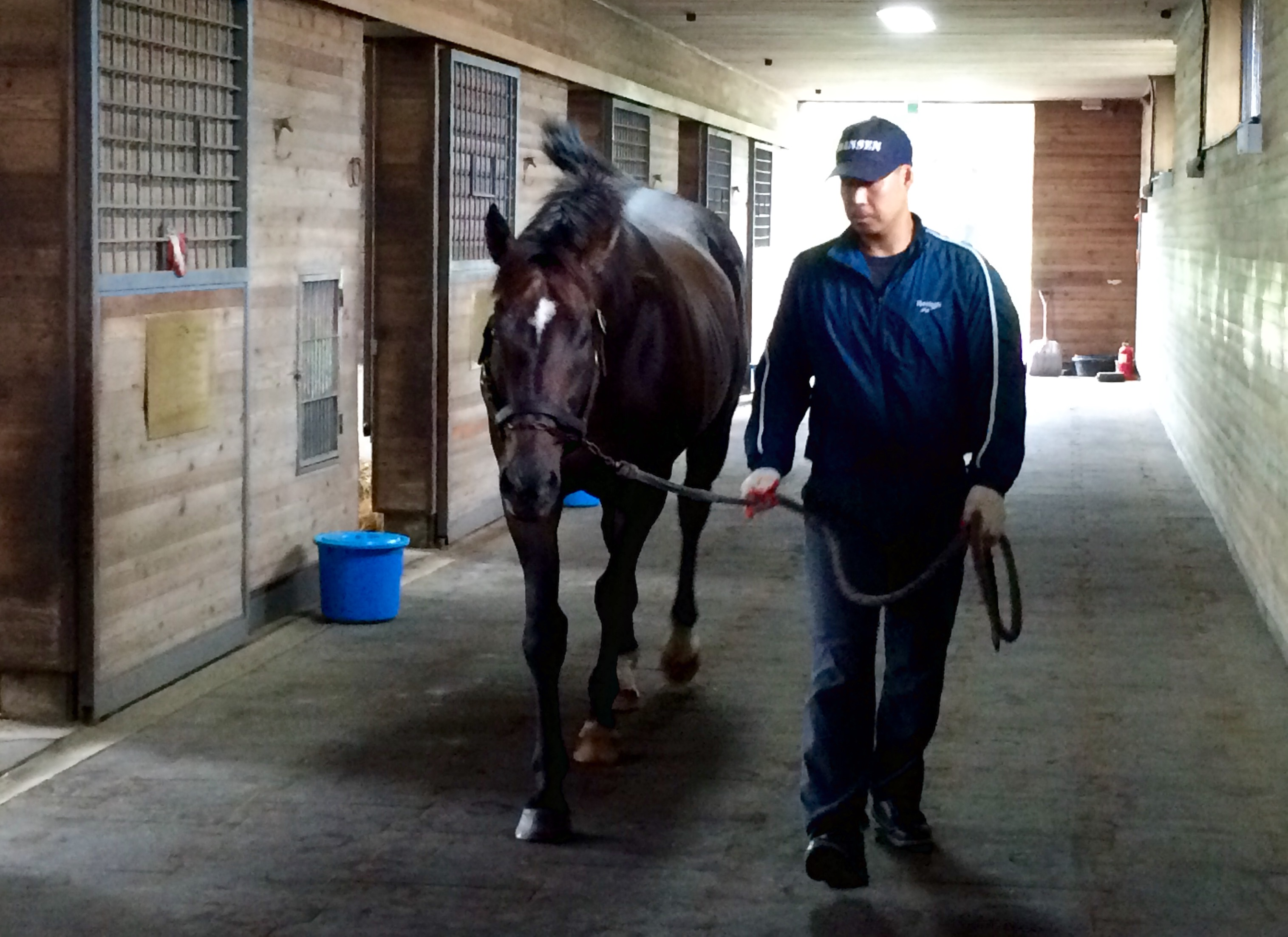 Star stallion: Kentucky Derby and Preakness runner-up Menifee, who stands at Let's Run Farm has dominated the Korean sires' standings for the past five years. Photo: Katherine Ford