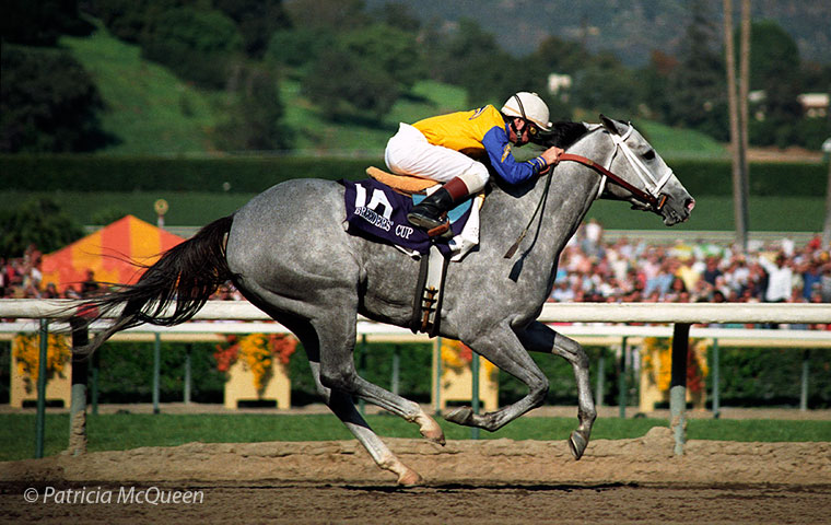 Secretariat's only Breeders' Cup winner: Lady's Secret storms home in the 1986 Distaff at Santa Anita. Photo: Patricia McQueen