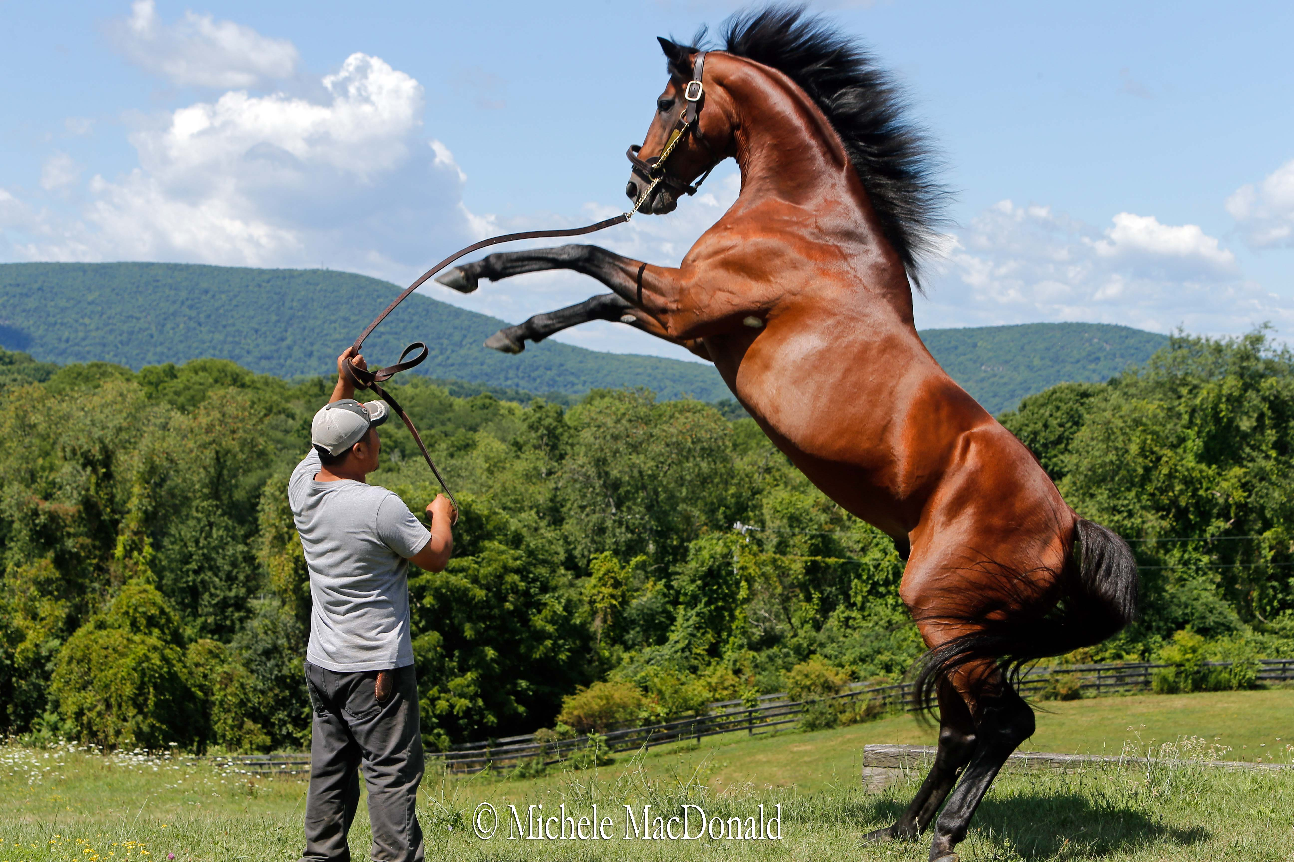 """Big Brown likes getting up on his hind legs,"" says Dutchess Views owner/manager Michael Lischin. Photo: Michele MacDonald"