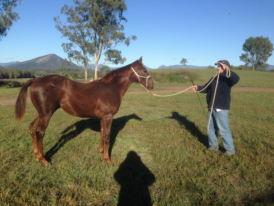 Learning the ropes: Winning Rupert the yearling with Jeff Cullen