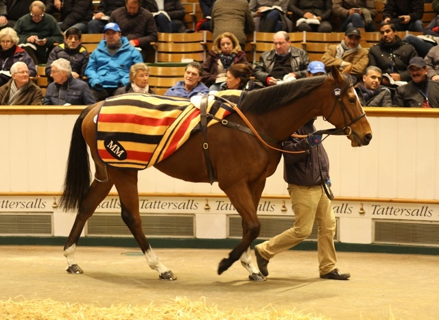 Andreas Putsch went to 935,000 gns for Irish Rookie, a daughter of Azamour, at the Tattersalls December Sale. She will visit Dubawi. Photo: Tattersalls