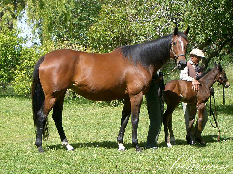 Express Way, half-sister of Eragon's dam, with Ejekutor (her fourth stallion son) as a foal. Ejekutor, who now stands at stud near Buenos Aires, has 'some wonderful foals'