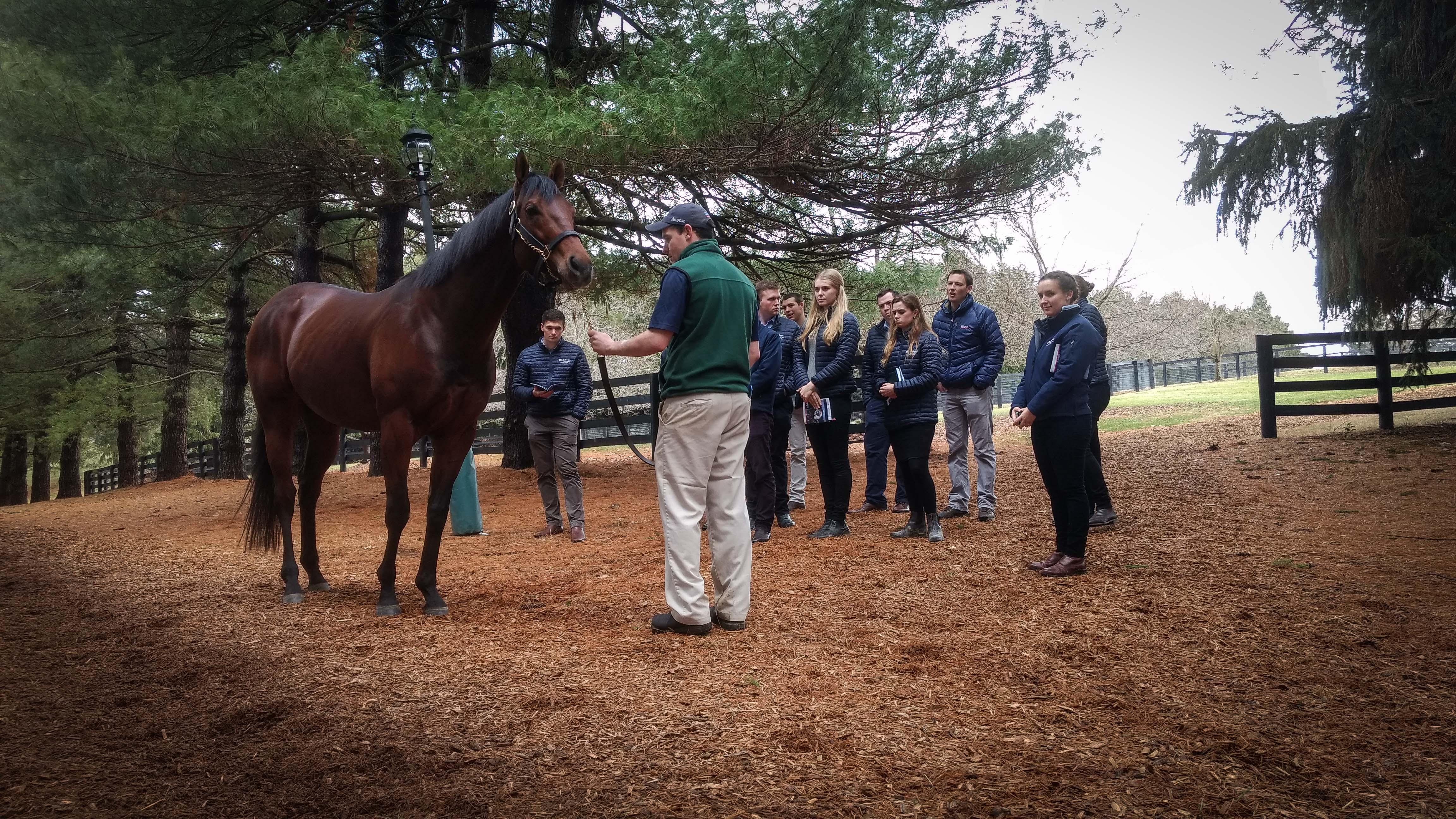 Air Force Blue: Flying Start graduate Scott Calder, now working with sales and marketing at Coolmore, gave the trainees a tour of Ashford Stud in Kentucky. Here the group is with the stallion Air Force Blue.  Photo: Amie Karlsson