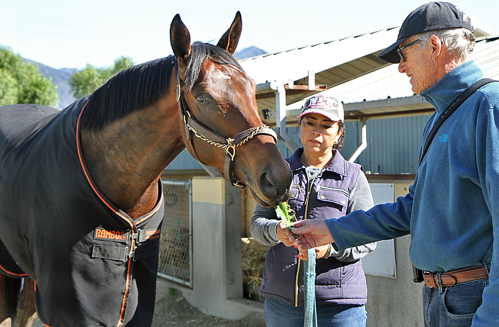 Now it's Royal Mo's turn to receive some post-workout nourishment from his trainer. Photo: Emily Shields