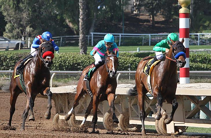 Thrilling matchup: Iliad (left) eventually takes second behind Mastery (leading) in the San Felipe, but well ahead of Gormley (centre). Photo: Emily Shields