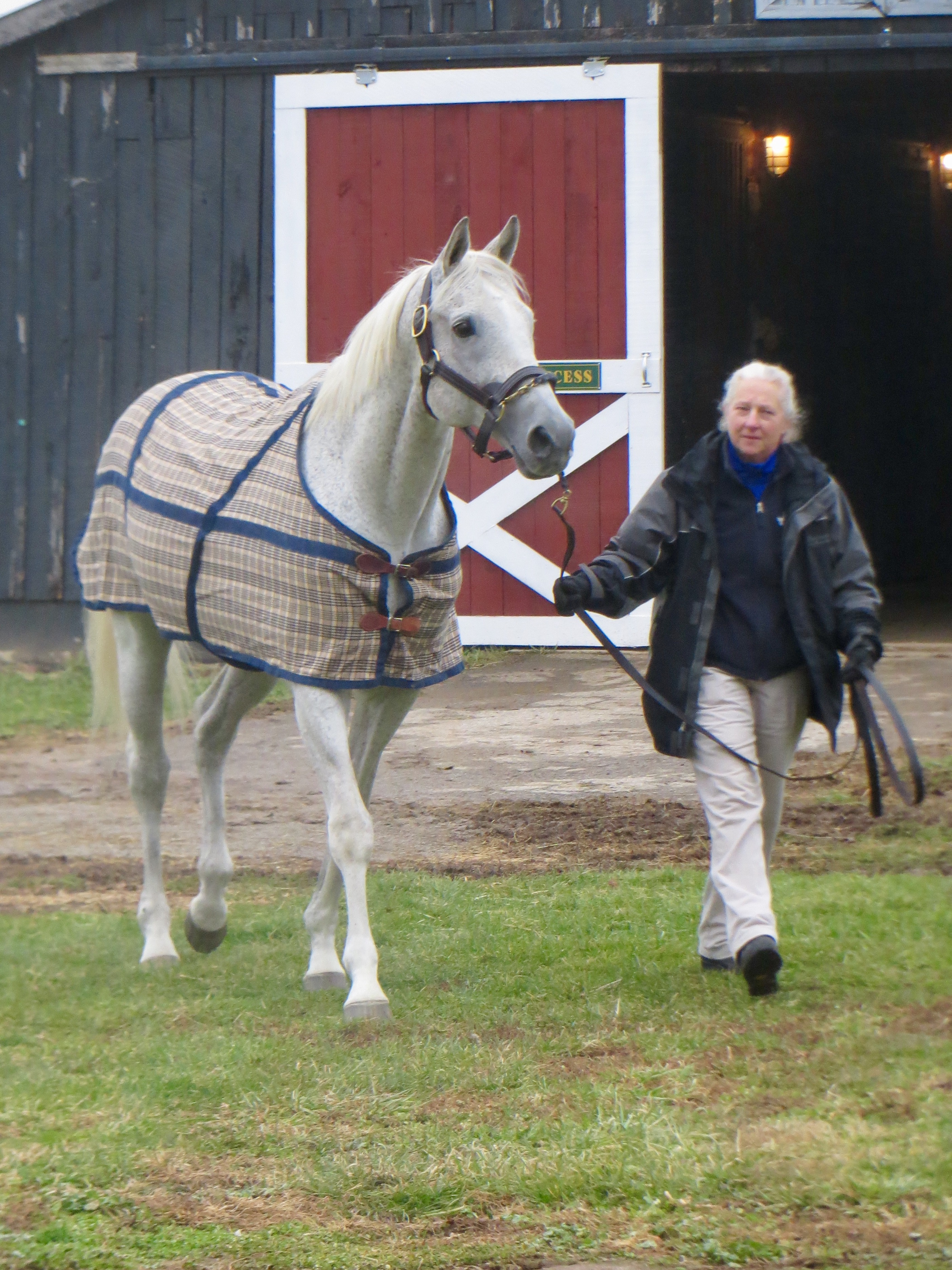 Back in the USA: Silver Charm is introduced to Old Friends on his return from Japan in 2014 by Three Chimneys stallion manager Sandy Hatfield. Photo: Amanda Duckworth