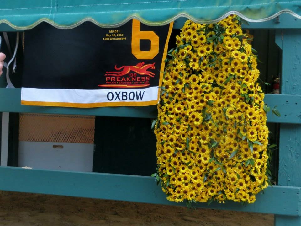The Preakness winner's garland is made of Black-eyed Susan flowers. Or is it? Photo: Amanda Duckworth