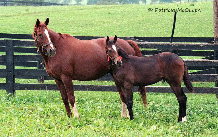 Secrettame with her 1993 foal, Sakura Secrettame, an unraced filly by Danzig. Photo: Patricia McQueen