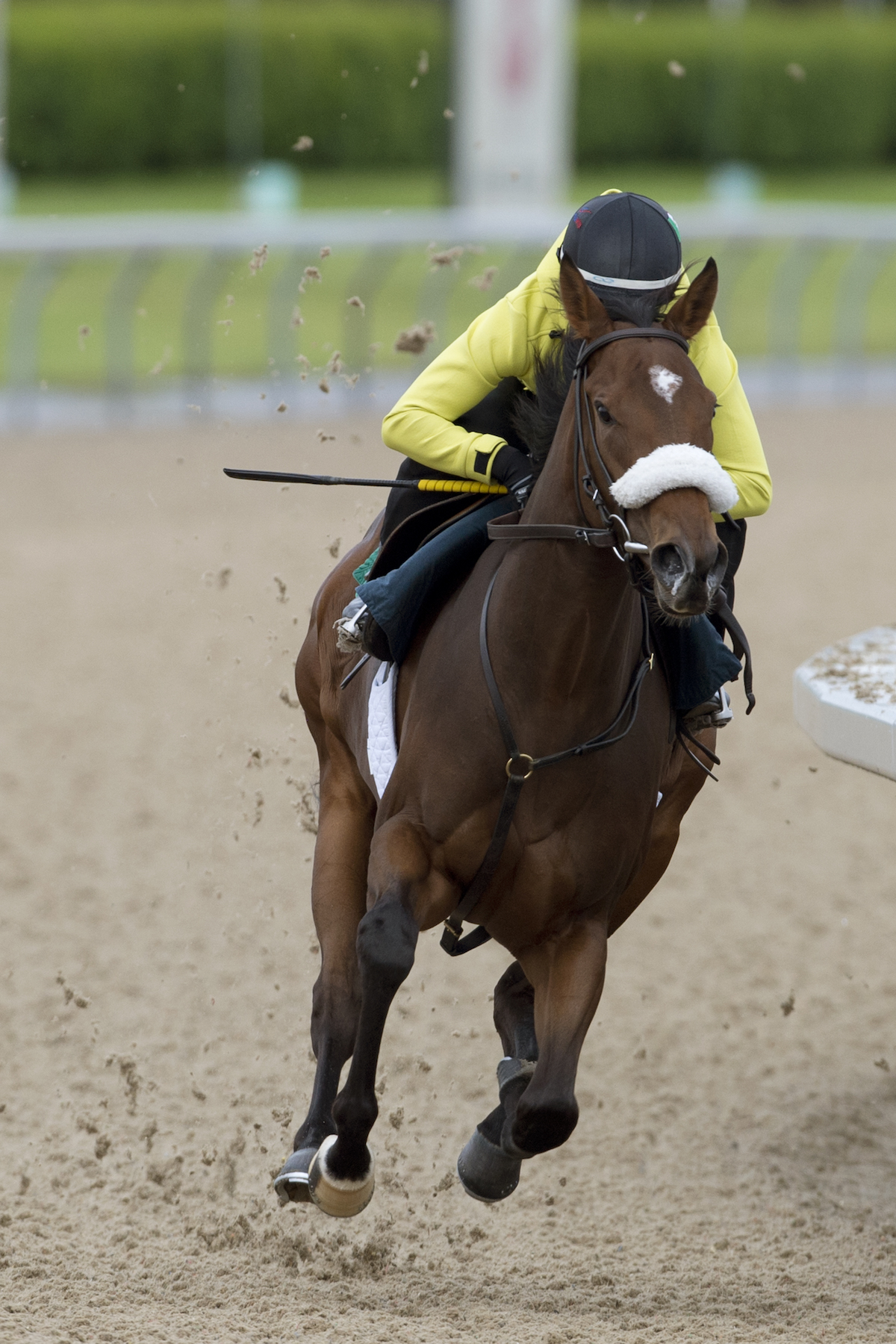 Holy Helena: trainer James Jerkens is confident she will appreciate the step up to nine furlongs in the Woodbine Oaks. Photo: Woodbine Entertainment Group