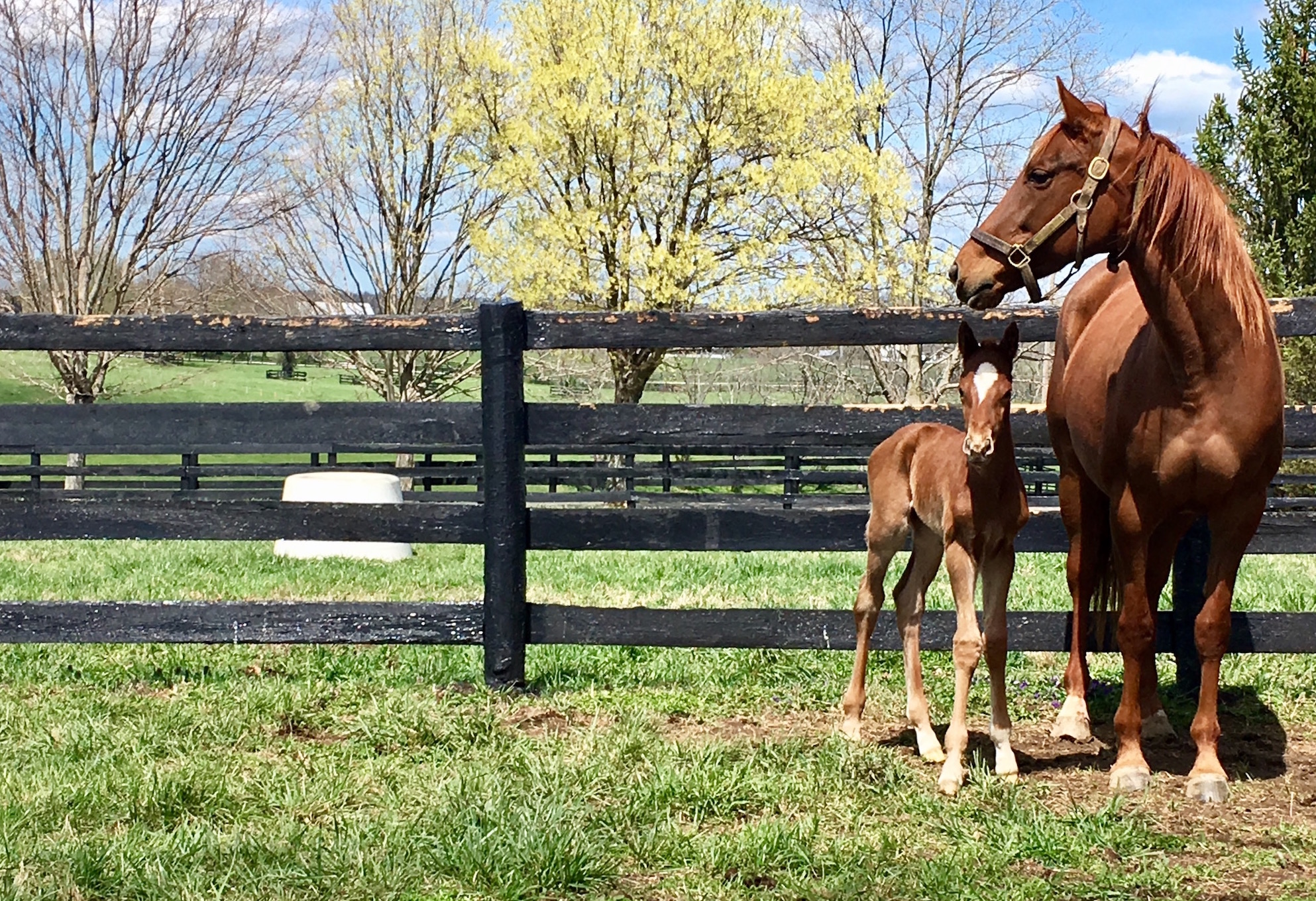 A Tapit mare with her newborn by Tale of the Cat at Stone Farm. Photo: Amanda Duckworth