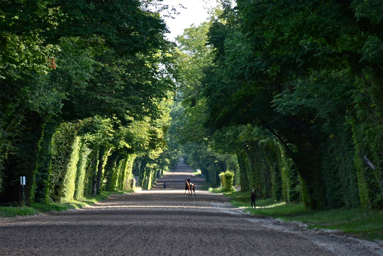 The Hollinshead team have easy access to spectacular gallops in the forest at Lamorlaye. Photo: Alex Cairns (www.winningpost.net); Twitter: @ACHorseRacing; Instagram @the_winning_post