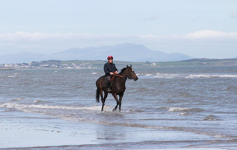A horse taking a stroll in the ocean before it runs at Laytown in Ireland. Photo: David Mooney