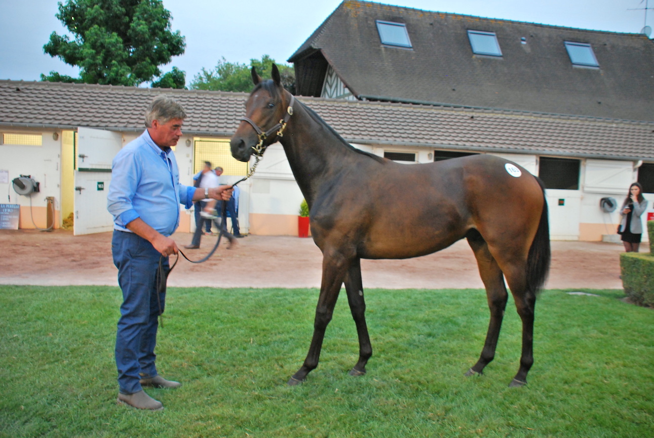 Ticking all the boxes: the Kingman colt out of Gradara eventually purchased by Crupi. Photo: John Gilmore