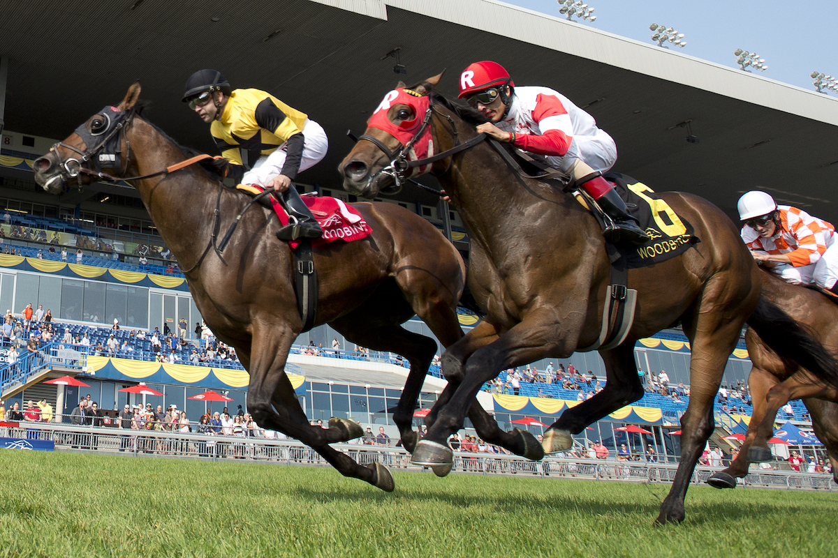 Untamed Domain takes the $200,000 Summer Stakes at Woodbine yesterday. Photo: Michael Burns Photography